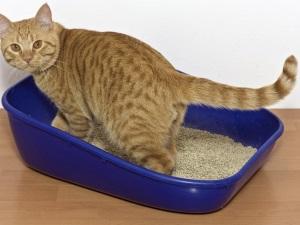 Контроль стула и мочи у кошки
