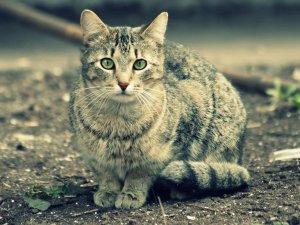 Распространенность заболевания среди бездомных кошек