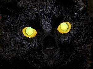 Глаза кошки ночью