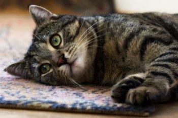 Проблема энтерита у кошек