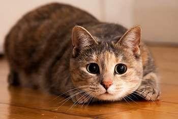 Возраст кошки