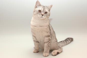 Проблема глистов у кошек