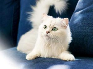 Клички для белых котов
