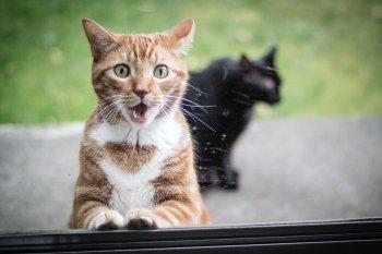 Выбор клички для кота