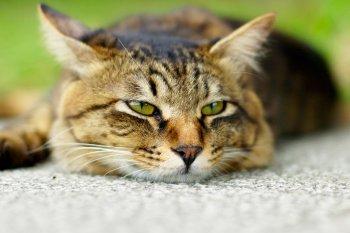 Проблема ринотрахеита у кошек