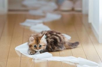 Проблема поноса у котенка