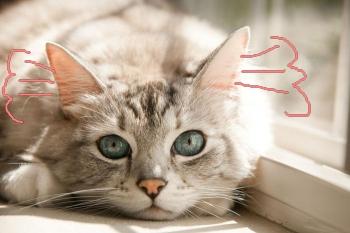 Горячие ушки у кота