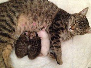 Потеря способности к размножению после стерилизации