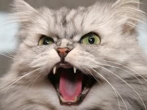 Выбор клички в зависимости от характера кота