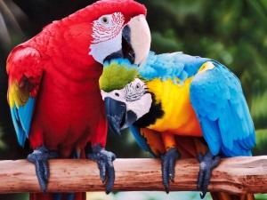 Имена для крупных попугаев