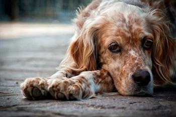 Проблема лишая у собаки