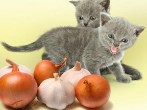 Лук, чеснок - отпугивающие запахи для кошек