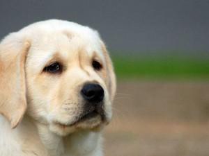 Плохое поведение собаки при недостатке внимания хозяев