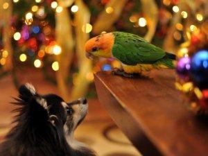Любовь попугаев к общению