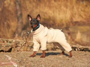 Защита собаки от переохлаждения
