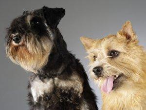 Выбор имени в зависимости от окраса собаки