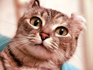 У кота гноится глаз что делать