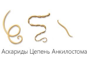 Виды паразитов у животных