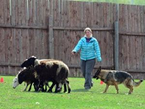 Немецкая овчарка - пастушья собака