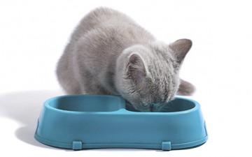 Питание британских котят
