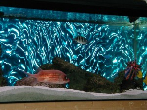 Пленка в аквариуме