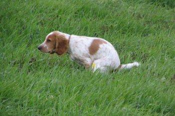 Проблема поноса у собак