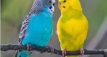 Выбор имени для попугая