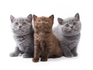 Выбор имени для породистого котенка