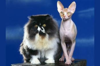 Разнообразные породы кошек