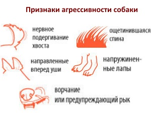 Признаки агрессивности у собаки