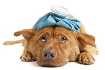 Проблема паразитов у собаки