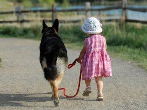 Необходимость регулярных прогулок с питомцем