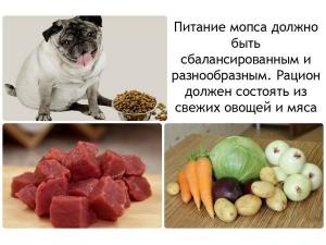 Рацион мопсов