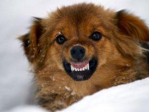Эклампсия у собаки после родов