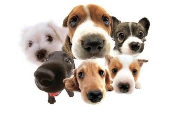 Разнообразие пород собак