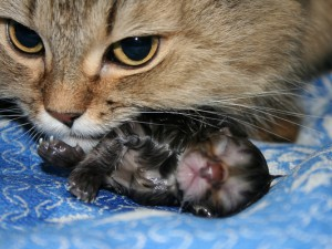 Норма температуры в зависимости от возраста кошки