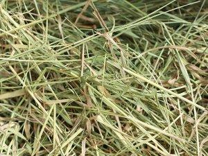 Обязательность сена в рациионе дегу