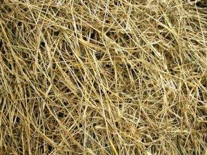 Польза сена для шиншилл