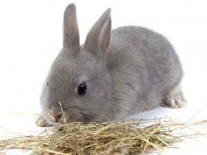 Кормление декоративных кроликов сеном