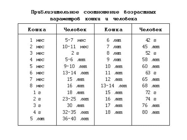 Приблизительное соотношение возрастных параметров кошки и человека