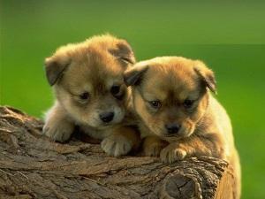 Польза общения щенка внутри семьи