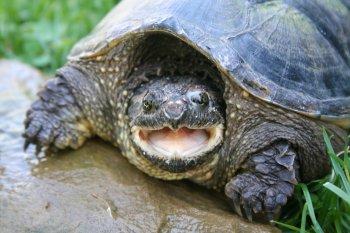 Выбор имени для черепахи