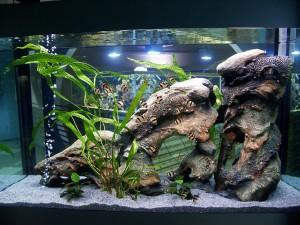 Скалы и тоннели для рыбок барбус денисони