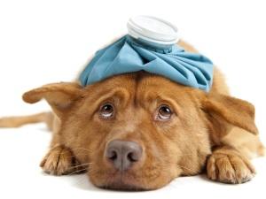 Проблема болей у собаки