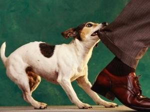 Агрессивное поведение у собаки