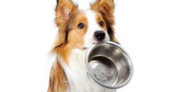 Кормление собаки сухим кормом