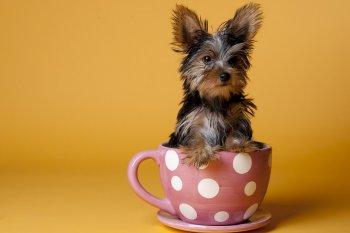 Выбор имени для маленькой собачки