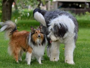 Заражение трихофитией при контакте с другими животными