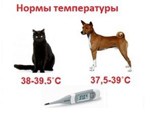 Нормальная температура у животных