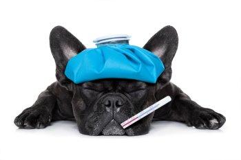 Измерение температуры у собак